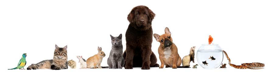 origen-de-las-mascotas