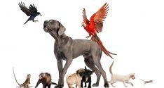 cuidados-mascotas